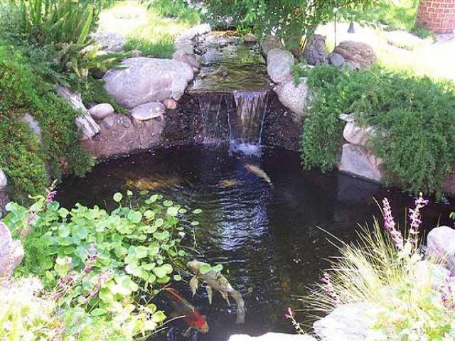 Home Old The Fish Lady Inc Koi And Pond Maintenance Specialist For Los Angeles